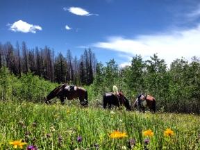 Horses & Wildflowers