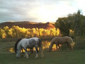 lazy_lb_ranch_080