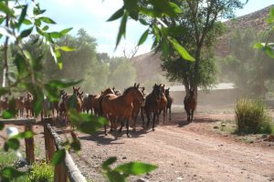 Horses, horses, horses!