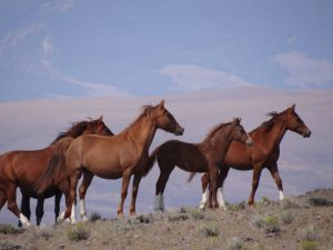 Wild Horses on the Mesa ride