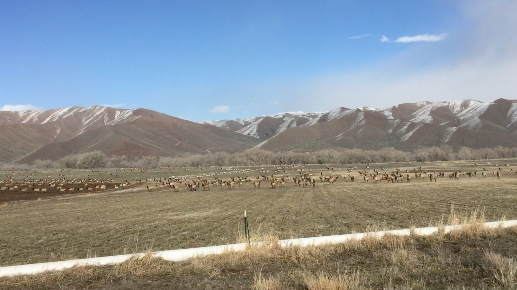 Spectacular elk near the Lazy L&B Ranch!
