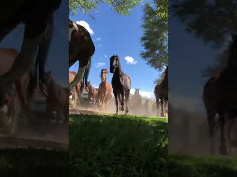 Horses Running to Pasture at the Lazy L&B Ranch
