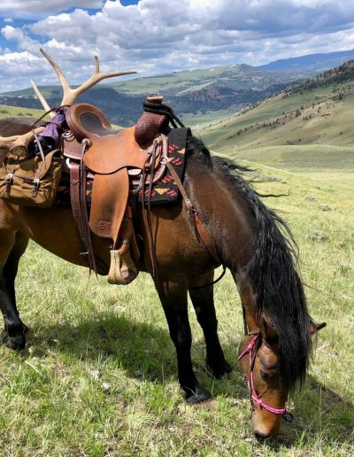 Grazing Horse with antler shed tied to saddle grazing in open landscape - Lazy L&B Guest Ranch Wyoming