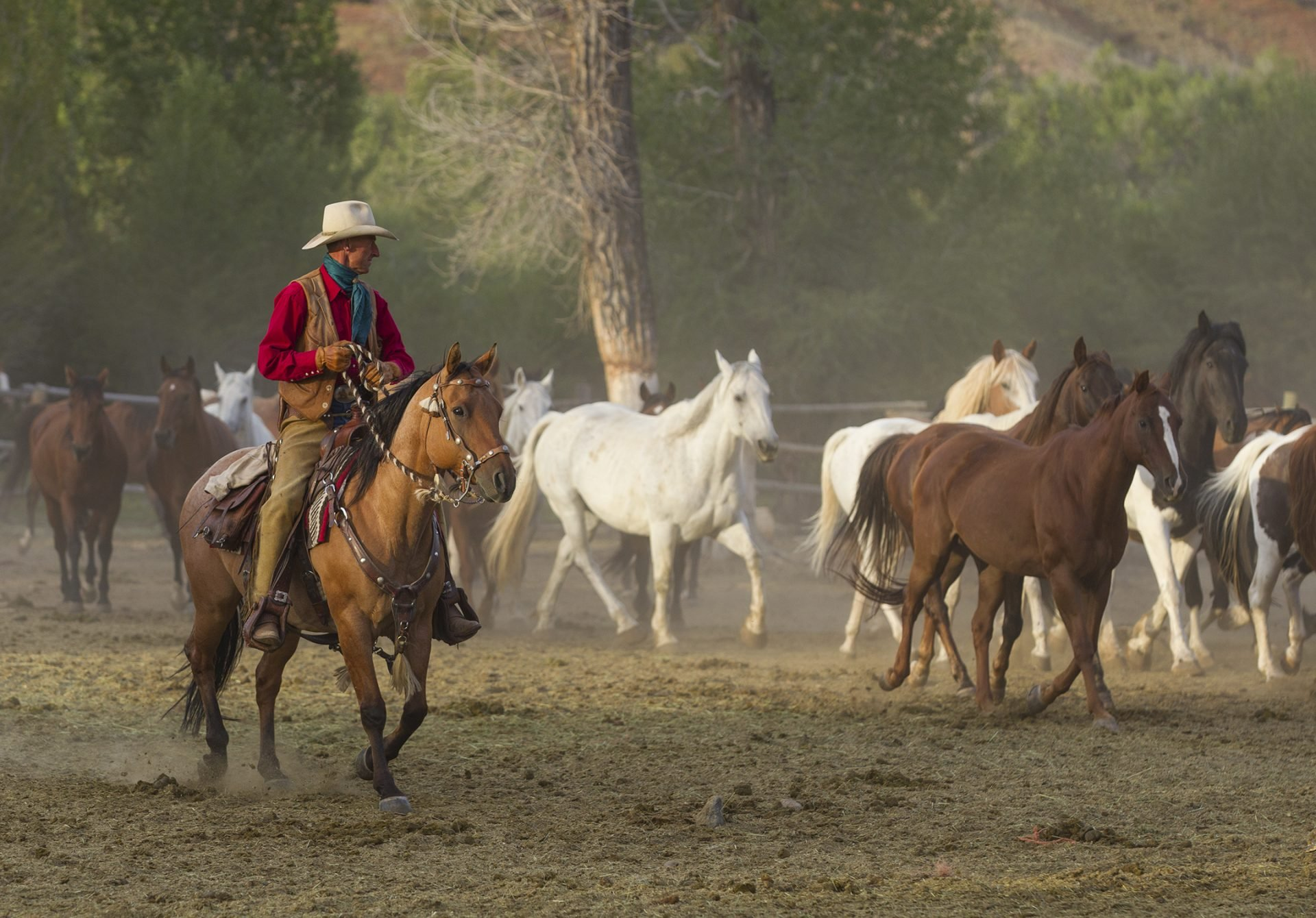 Cowboy on horseback rounding up a herd of horses - Lazy L&B Guest Ranch Wyoming